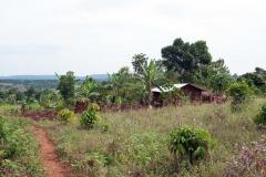 Am Land-Uganda