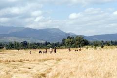 Die Ernte-Athiopien